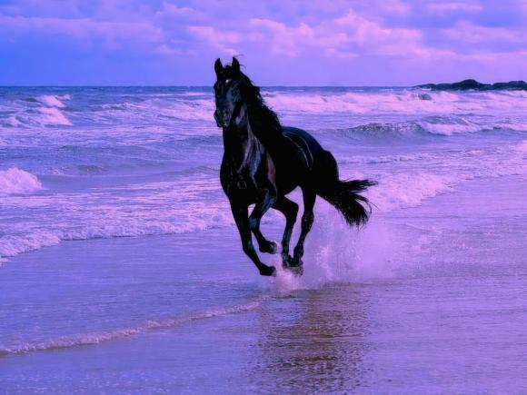 http://azona.cowblog.fr/images/Imagesblog/cheval2.jpg