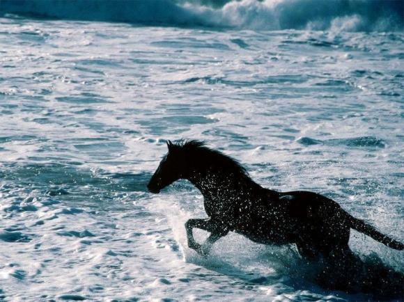 http://azona.cowblog.fr/images/Imagesblog/chevalmer.jpg