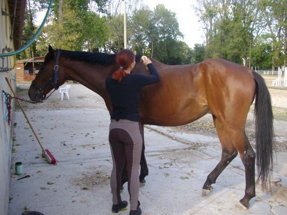 http://azona.cowblog.fr/images/Imagesblog/equitation003.jpg