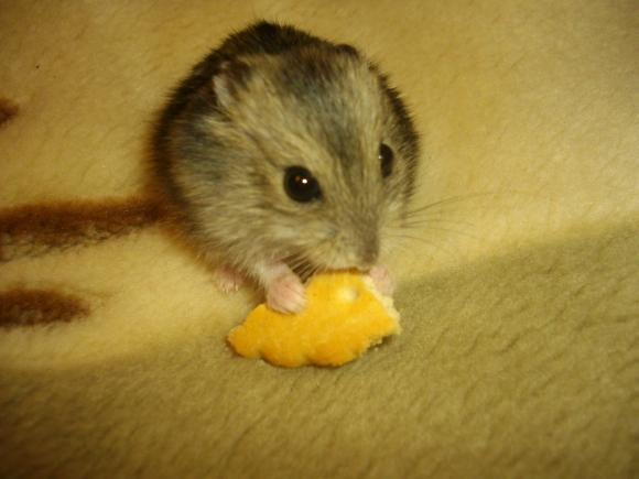 http://azona.cowblog.fr/images/Imagesblog/hamsteretequitation003.jpg