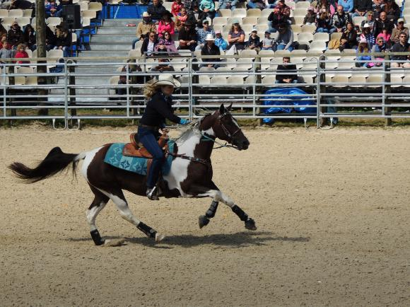 http://azona.cowblog.fr/images/Repertoire6/equiblues003.jpg