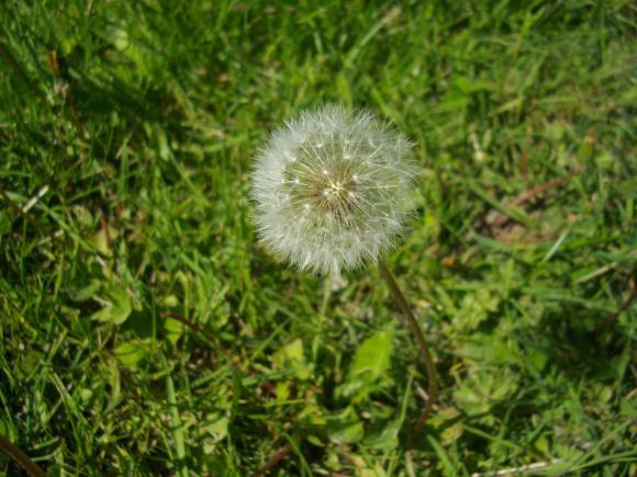 http://azona.cowblog.fr/images/nature003.jpg
