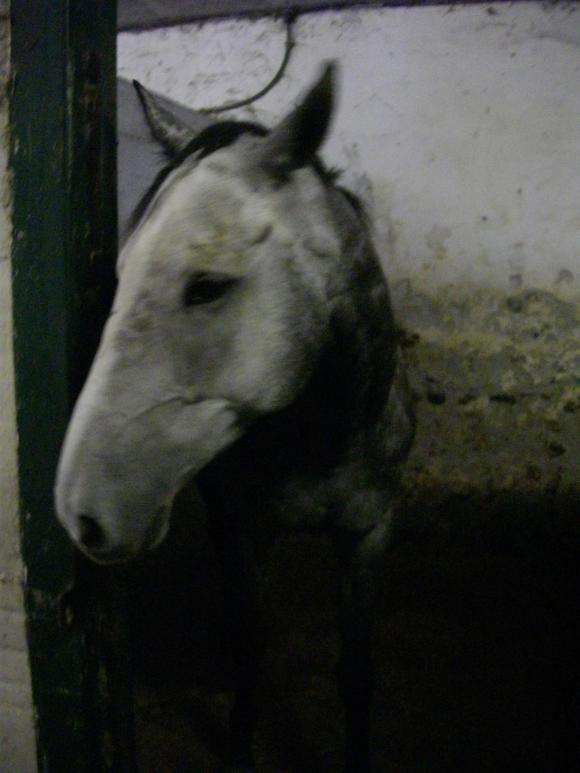 http://azona.cowblog.fr/images/quelartistedivers010.jpg