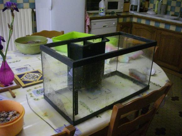 http://azona.cowblog.fr/images/repertoire3/aquarium013.jpg