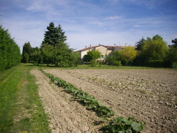 http://azona.cowblog.fr/images/repertoire3/festiwesticountry008.jpg
