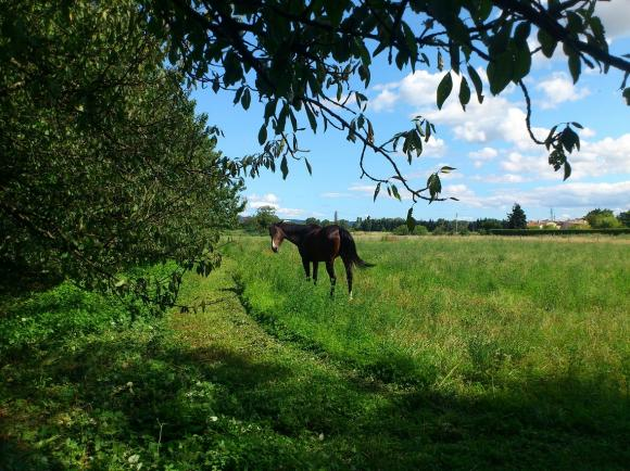http://azona.cowblog.fr/images/repertoire4/DSC0078.jpg
