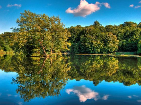 http://azona.cowblog.fr/images/repertoire4/arbreetreflet.jpg