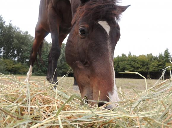 http://azona.cowblog.fr/images/repertoire4/juments087.jpg