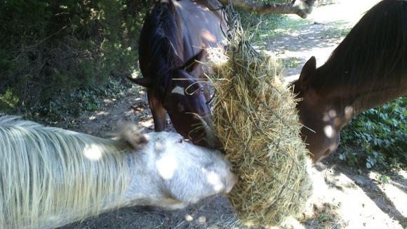 http://azona.cowblog.fr/images/repertoire5/DSC0061.jpg