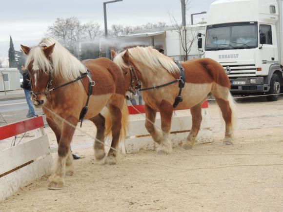 http://azona.cowblog.fr/images/repertoire5/chevalpassionavignon012.jpg