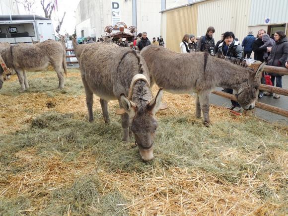 http://azona.cowblog.fr/images/repertoire5/chevalpassionavignon052.jpg
