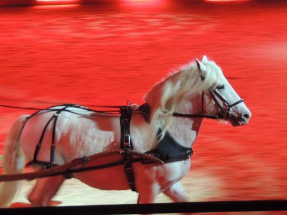 http://azona.cowblog.fr/images/repertoire5/chevalpassionavignon082.jpg