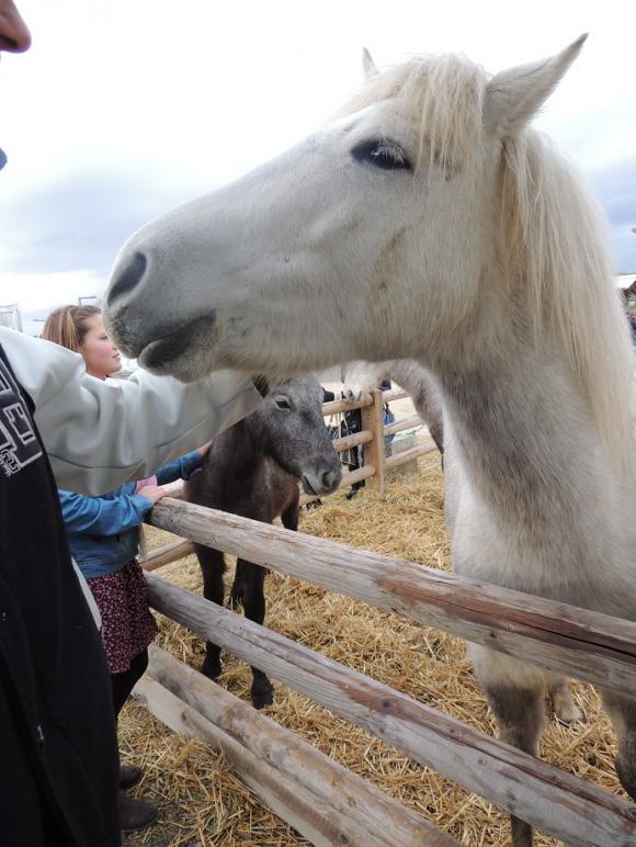 http://azona.cowblog.fr/images/repertoire5/chevalpassionavignon104.jpg