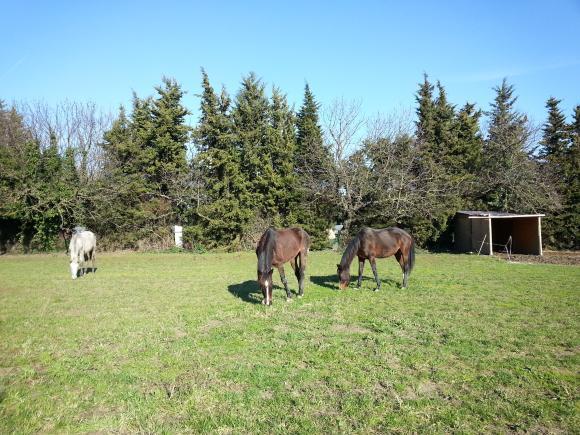 http://azona.cowblog.fr/images/repertoire5/chevaux053.jpg
