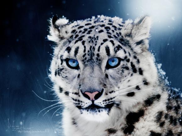 http://azona.cowblog.fr/images/repertoire5/leopard.jpg